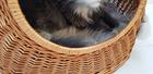 Budka Wiklinowa naturalna  z beżowymi chwostami Boho i beżowym kocykiem Dla Psa,Kota  ( York, Maltańczyk, Shih Tzu, Maine Coon ) (5)