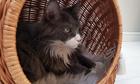 Budka Wiklinowa naturalna z beżowym kocykiem Dla Psa,Kota  ( York, Maltańczyk, Shih Tzu, Maine Coon ) (6)