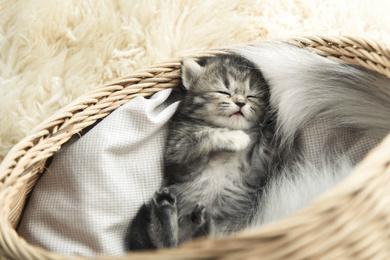Stylowe legowisko dla kota z wikliny – dlaczego warto wybrać?