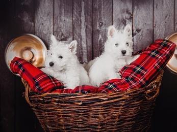 legowiska wiklinowe dla małych psów